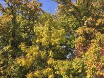Skog tidig höst Träd Arkivfoto