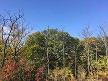 Skog tidig höst Träd blå himmel arkivfoto