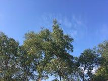 Skog tidig höst Upp sikt på träd arkivfoto