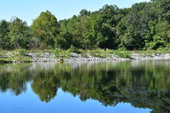 Skog totalt reflekterad på en lugna sjö Royaltyfri Fotografi