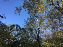 Skog träd Arkivfoto
