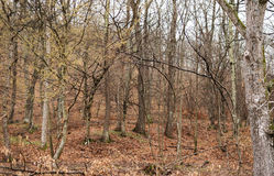 Skog träd i våt dag royaltyfri fotografi