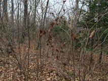 Skog träd Natur av hösten Royaltyfri Fotografi