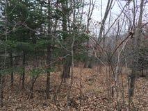 Skog träd Natur av hösten Arkivfoto