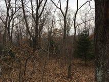 Skog träd Natur av hösten Fotografering för Bildbyråer