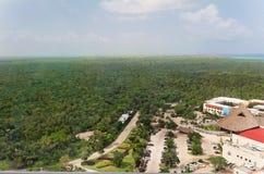 skog tropiska yucatan Fotografering för Bildbyråer