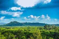 Skog under blå himmel Arkivfoto