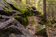 Skog under höstsäsong i Michigan Arkivbild