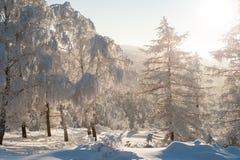 Skog under tung snö royaltyfria bilder