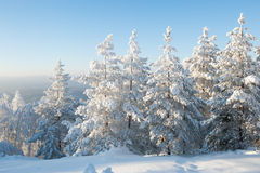 Skog under tung snö royaltyfri bild