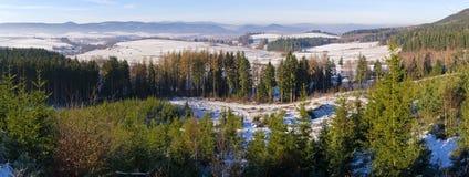 Skog under vintern arkivbilder
