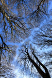 skog upp sikt Royaltyfria Bilder