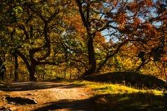 Skog vid nedgången royaltyfri fotografi