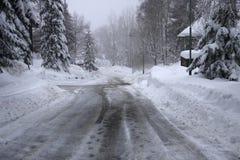skog winterly royaltyfri bild