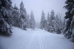 skog winterly royaltyfri fotografi