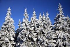 skog winterly arkivfoto