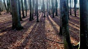 skog winterly royaltyfria foton