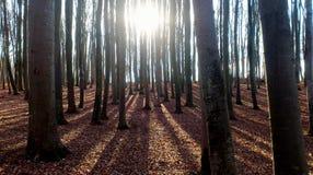 skog winterly arkivbild