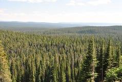 Skog Yellowstone nationalpark, Wyoming arkivfoto