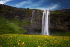 Skogafoss-Wasserfall und gelbe Blume im Sommer, Island Stockfotografie