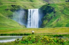 Skogafoss waterfall and bird. Natural icelandic background. Travelling on Iceland. Famouns place in Iceland.