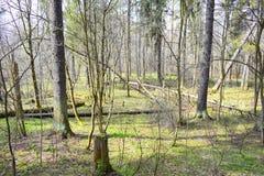 Skogar är det framträdande jordiska ekosystemet av jord och är utdelade över jordklotet royaltyfria foton