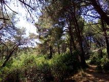 skogar Royaltyfri Foto