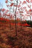 skogar fotografering för bildbyråer