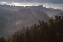 Skogar av bohemmet Schweiz Arkivfoton