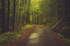Skogar av Carpathiansna Arkivbilder