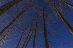 Skogar av dimmiga chpos Arkivbild