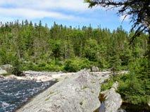 Skogar av Nova Scotia royaltyfria bilder