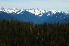 Skogar av orkanen Ridge Arkivbild