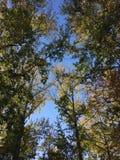 Skogar blir musor royaltyfria bilder