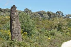 Skogar för korkek i bergen Arkivfoto