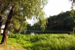 Skogar och flodDesna chernigiv royaltyfri bild