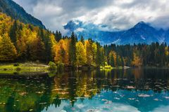Skogar reflekteras i greeenvattnet Royaltyfri Foto