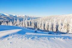 Skogar som täckas med snö Arkivfoton