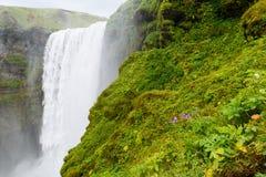 skogar sydlig vattenfall för iceland skogafoss Arkivbild