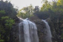 Skogar, vattenfall och strömmar som ska kopplas av royaltyfria bilder