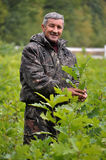 Skogarbetare i nursery_4 Arkivfoton