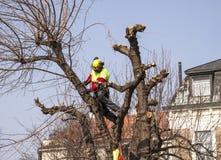 Skogarbetare som kantjusterar ett träd Royaltyfri Bild