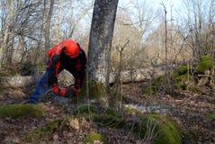 skogarbete Arkivfoton