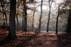 skogbänk Royaltyfria Bilder