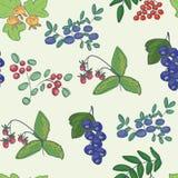 Skogbär - bakgrund arkivfoton