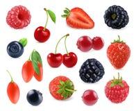 Skogbär Söt frukt symbolsuppsättning för vektor 3d Arkivfoto