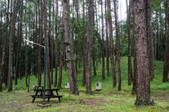 Skogbakgrund i Doi inthanon arkivfoto