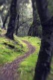 skogbana Fotografering för Bildbyråer