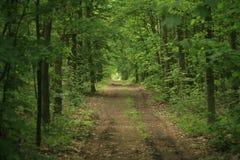 skogbana Royaltyfri Foto