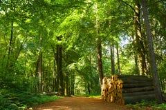 skogbana Royaltyfria Bilder